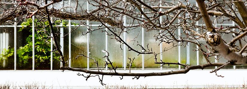 greenhouse-winter