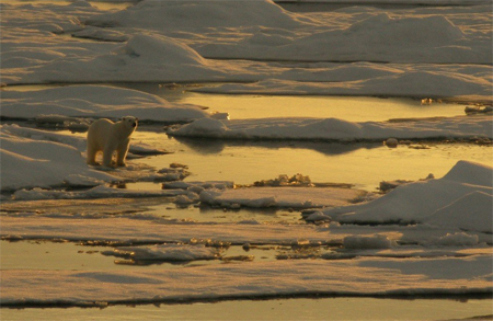 photo of a polar bear on ice surrounded by large pockets of water