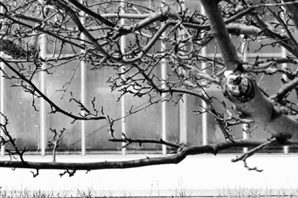 greenhouse in winter at york