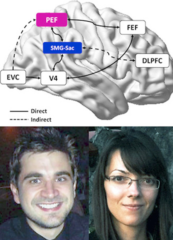 composite image of the brain with photos of Ben Dunkley and Bianca Baltaretu