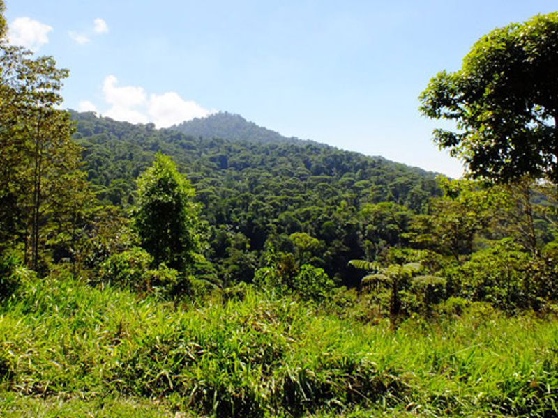 photo of the view of Las Nubes rainforest from the York property across the river