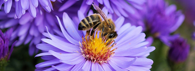 photo of a bee on a flower