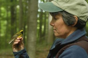 Bridget Stuchbury looks at a small bird. She is standing in the middle of a forest.